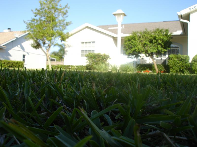 Sod installation is just one of our specialties